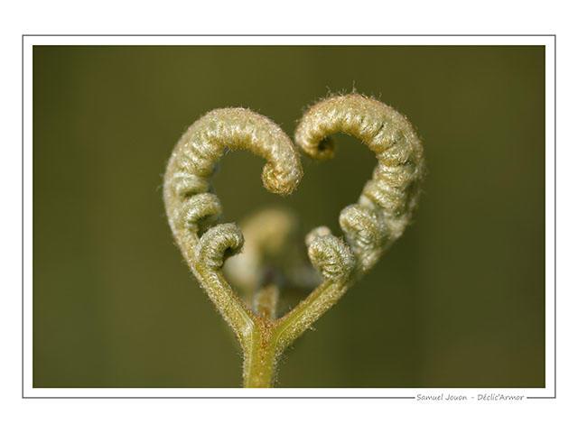 SJ_love nature-min