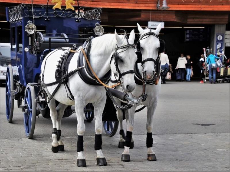 cheval_calèche