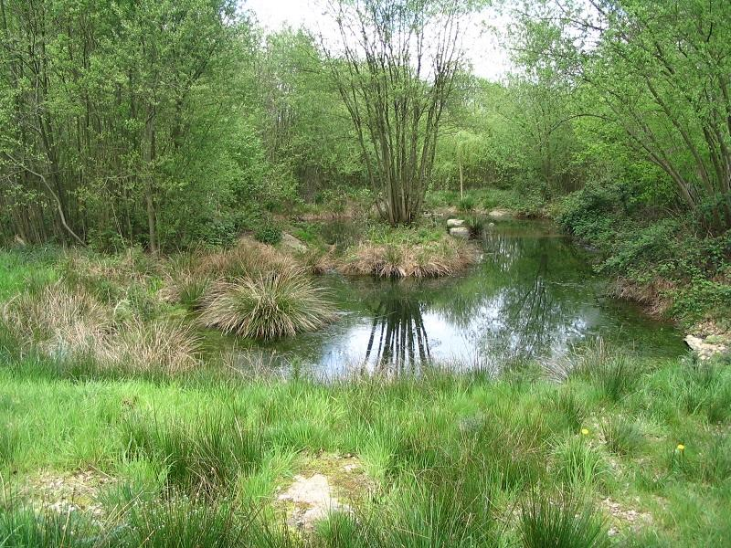 Monthault Carex au Bois Ainaux