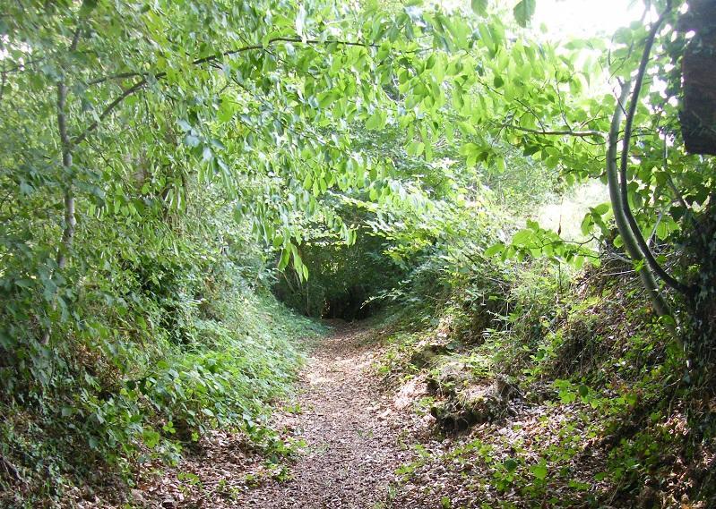 9_Le Ferre_Chemin creux