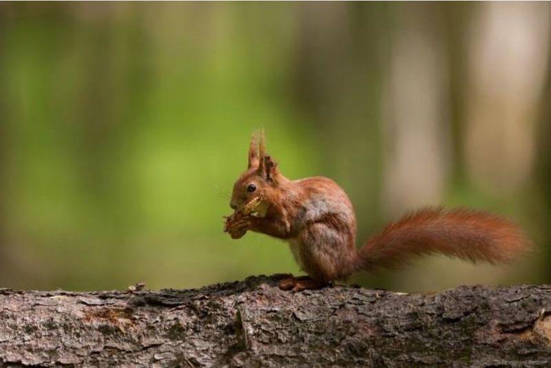 Rando écureuil n°11