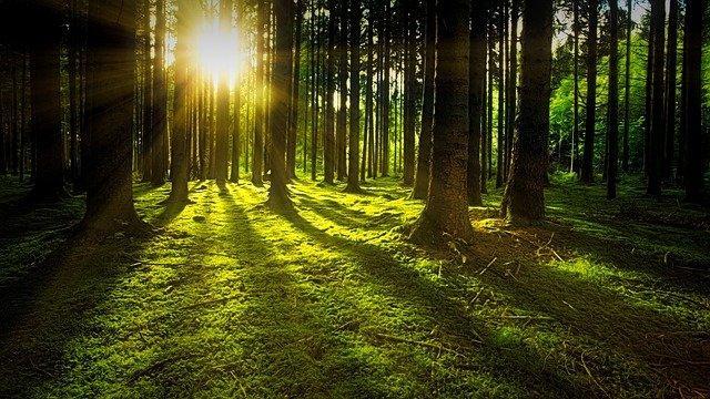 trees-g3640cf2a5_640