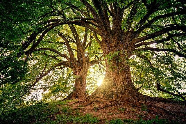 trees-g7aaa4e128_640