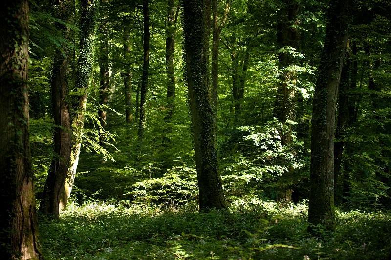 Au coeur de la forêt de Villecartier-Bazouges-la-Pérouse-stenphoto.fr