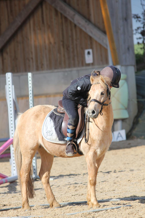 Poney - Le Bois Gerard - Centre equestre