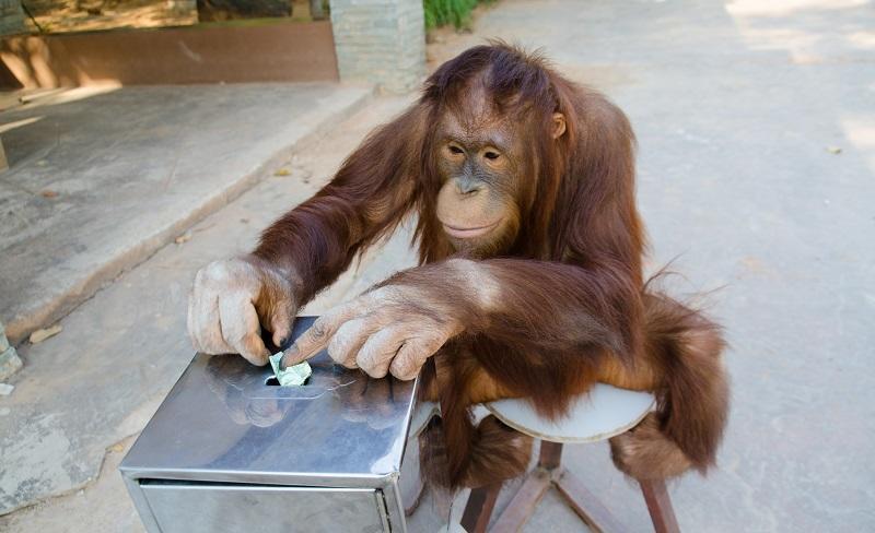 Intelligences animales ©Shutterstock