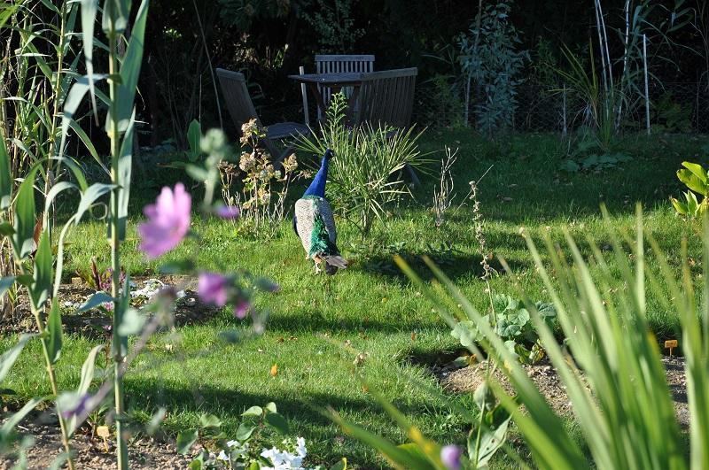 Jardin exotique Cosy Home