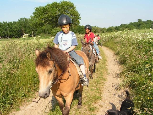 Les poneys de la Jouv'