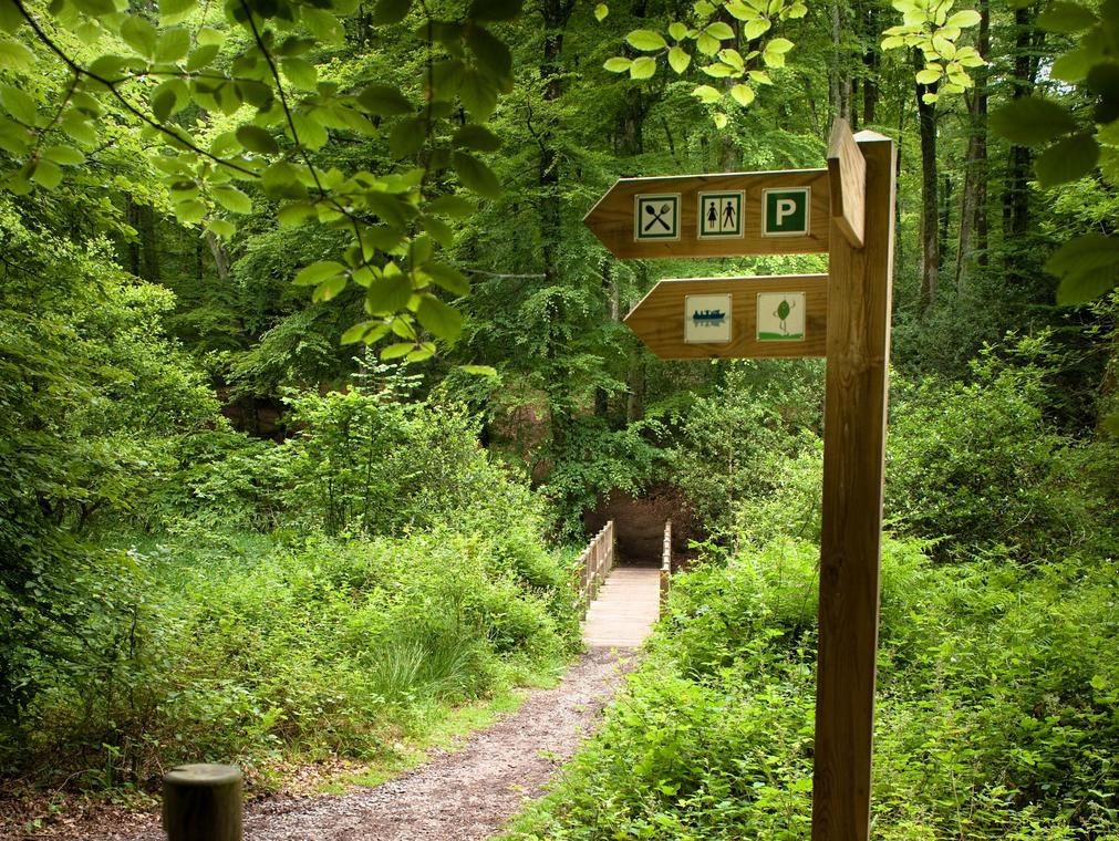 Pont en forêt de Villecartier 2