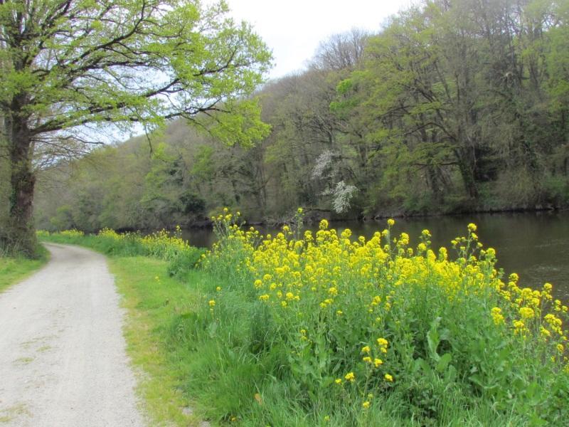 chemin de halage le long de la Vilaine