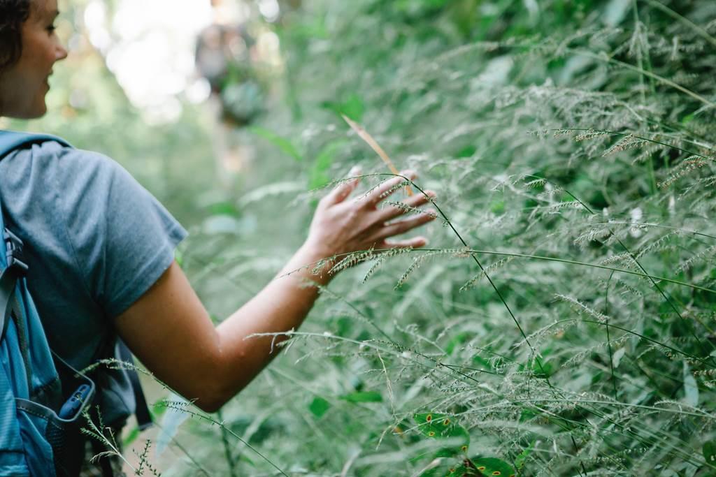 balade plantes