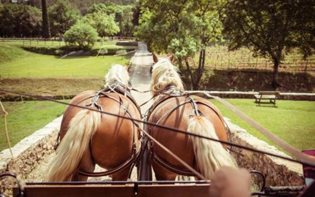 Les cavaliers-Meneurs-randonneurs du quercy-Vert
