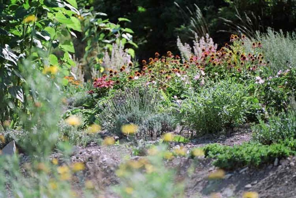 jardins plantes medicinales