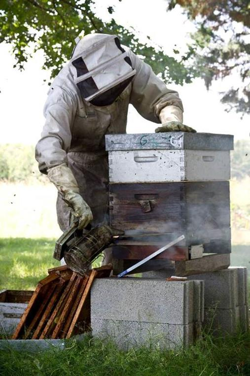 Bee au top