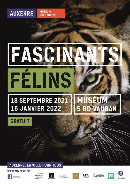 FASCINANTS FÉLINS - NOUVELLE EXPOSITION AU MUSÉUM D'AUXERRE
