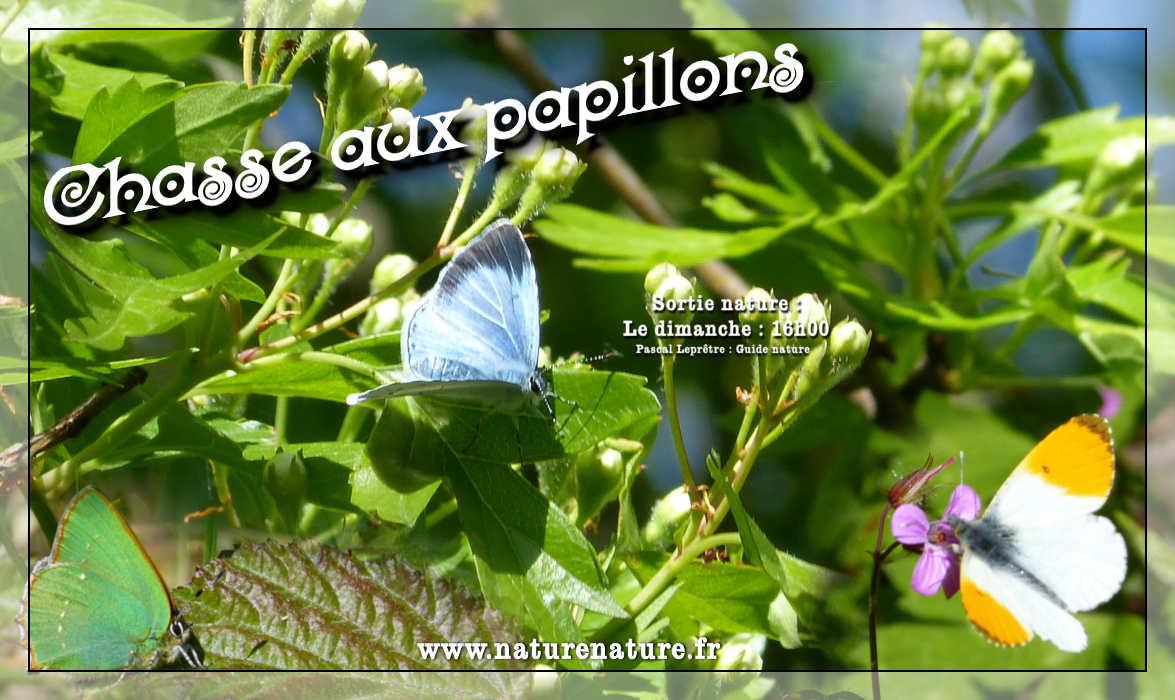 Chasse-aux-papillons-M-LEPRETRE-2019