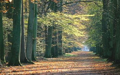 Forêt_vue < Villers-Cotterêts < Aisne < Picardie