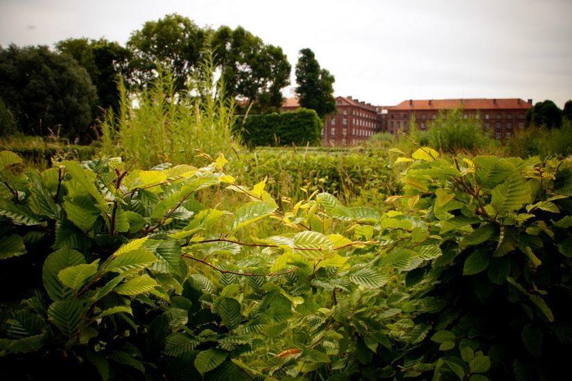 Jardin de la Presqu'ile < Familistère < Guise < Thiérache < Aisne < Picardie < Hauts de France