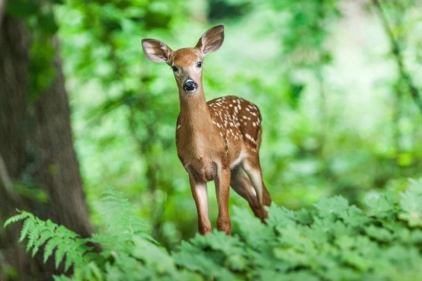 Les habitants de la forêt de crécy