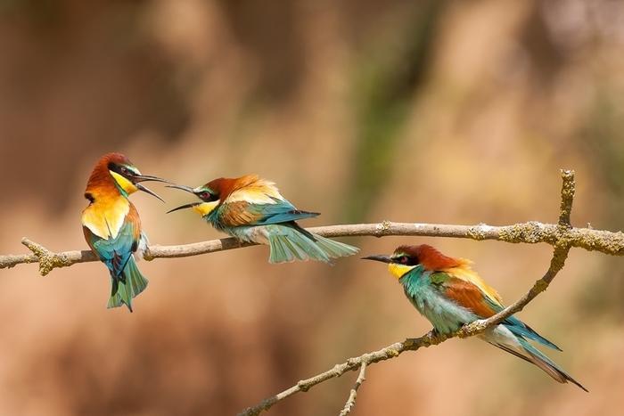 Sortie à la découverte des oiseaux_1