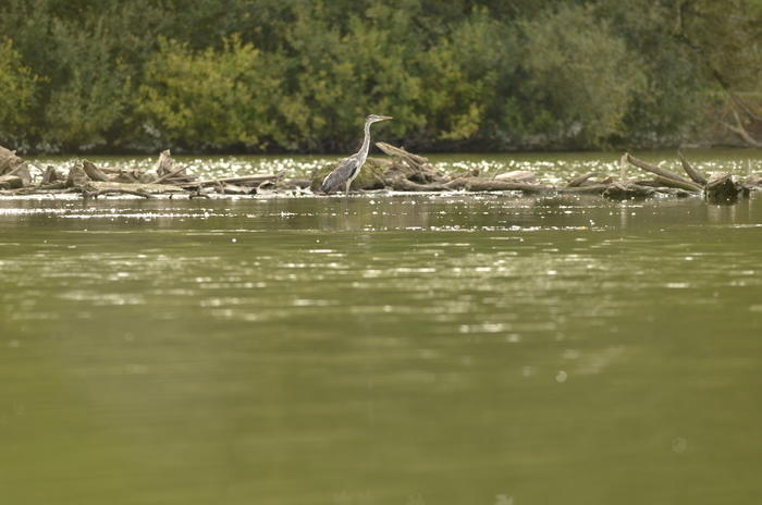 Balade naturaliste : biodiversité et paysage_1