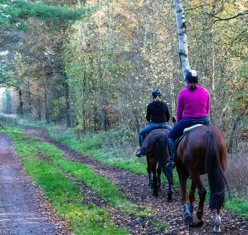 horseback-riding-6097625_1280