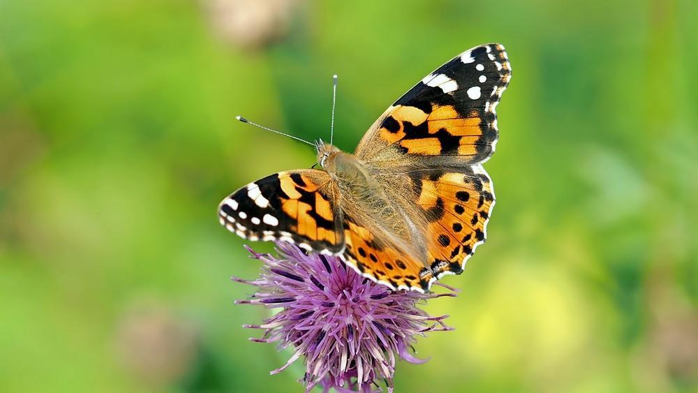 Sortie nature observation animaux papillon < Laon < Aisne < Picardie
