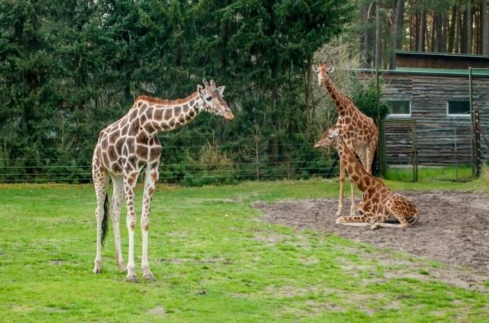 Sortie familiale au parc zoologique de Thoiry avec la Maison de quartier Jacques Brel_1