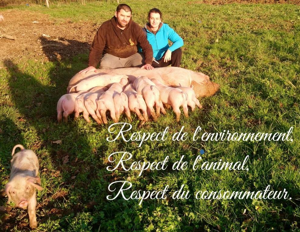 ferme-cochons-antan-Lege-44-deg-1