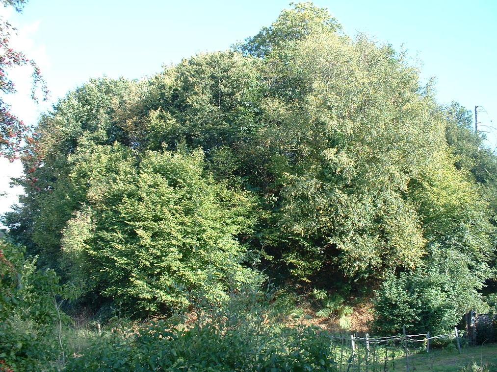 Motte féodale site du 19082005 010
