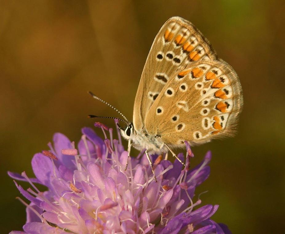 Flore et faune des falaises calcaires des côtes de Beaune
