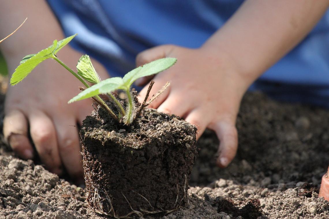 potager-jardin-enfant-237003