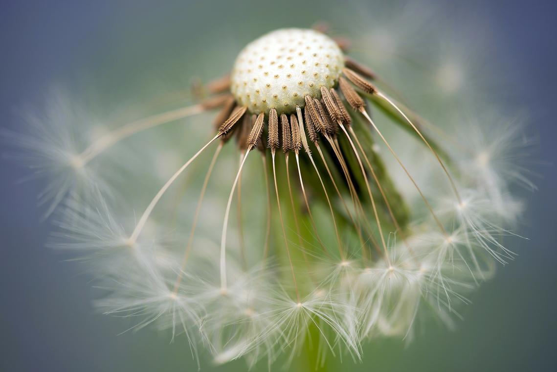 Plantes (2)