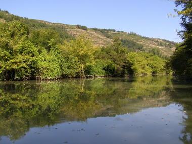 Lône fleuve du Rhône à Tupin-et-Semons