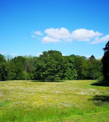 Domaine des Longrais_St Thurial_chênes centenaires