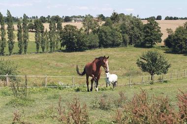 Pature chevaux Gite la Hulotte -St-Malon-sur-Mel