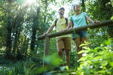 Forêt de Montfort-sur-Meu