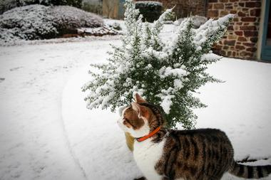Gîte du Petit Peuple_Paimpont_neige
