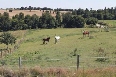 Pature chevaux La Hulotte - St-Malon-sur-Mel