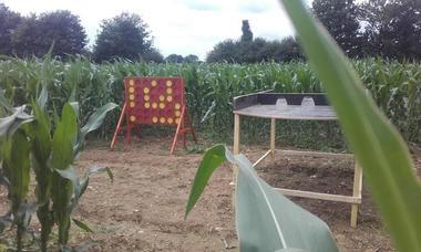 Labyrinthe de maïs des champs fleuris