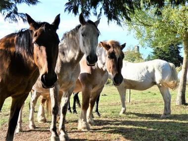 les chevaux du vent la claie des landes - Copie