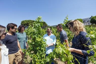 Visite du vignoble en combi et à plusieurs