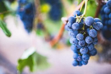 Grappe de raisin Wine Tour Angers