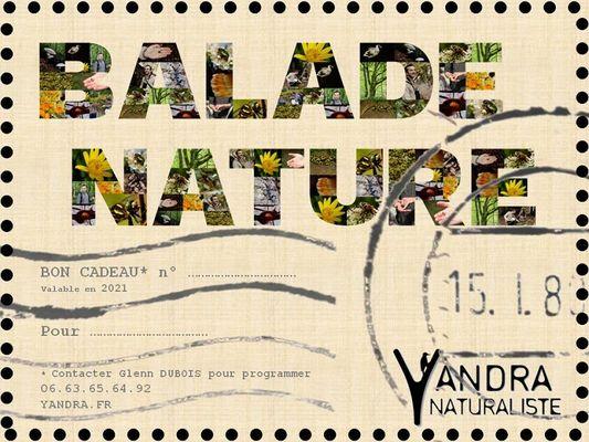 Yandra Naturaliste