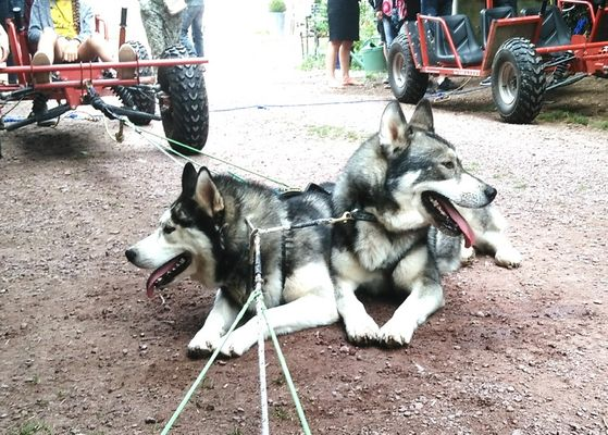 Ferme Nordique_Paimpont_chiens_4