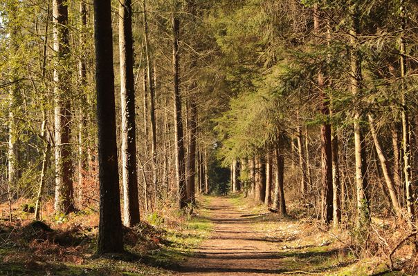 Forêt d'automne Montfort-sur-Meu
