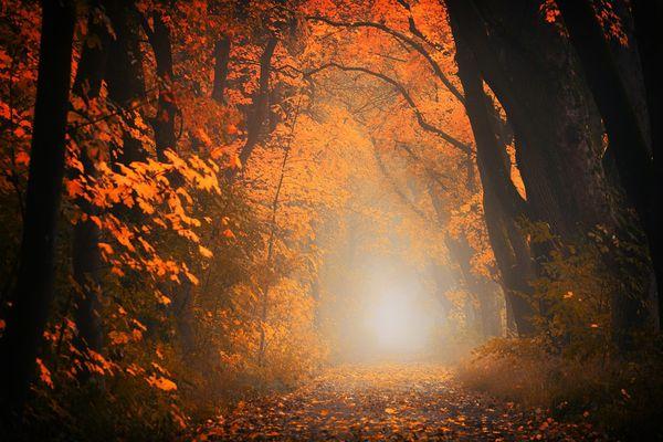 Hermine et Ajonc_automne