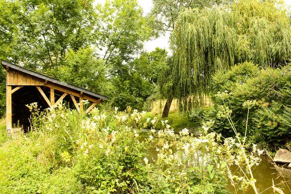Parc de l'étang de la Cane Montfort-sur-Meu
