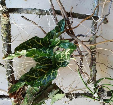 atelier nature maison du patrimoine brocéliande