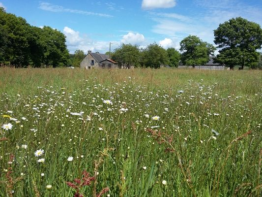 prairie-de-fleurs-sauvages-autour-de-La-vieille-ferme